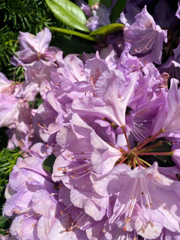 Roadside flowers Salem MA