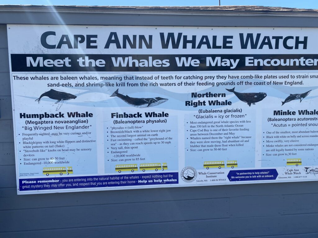 Whale watching in Gloucester